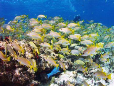 underwater sealife photography